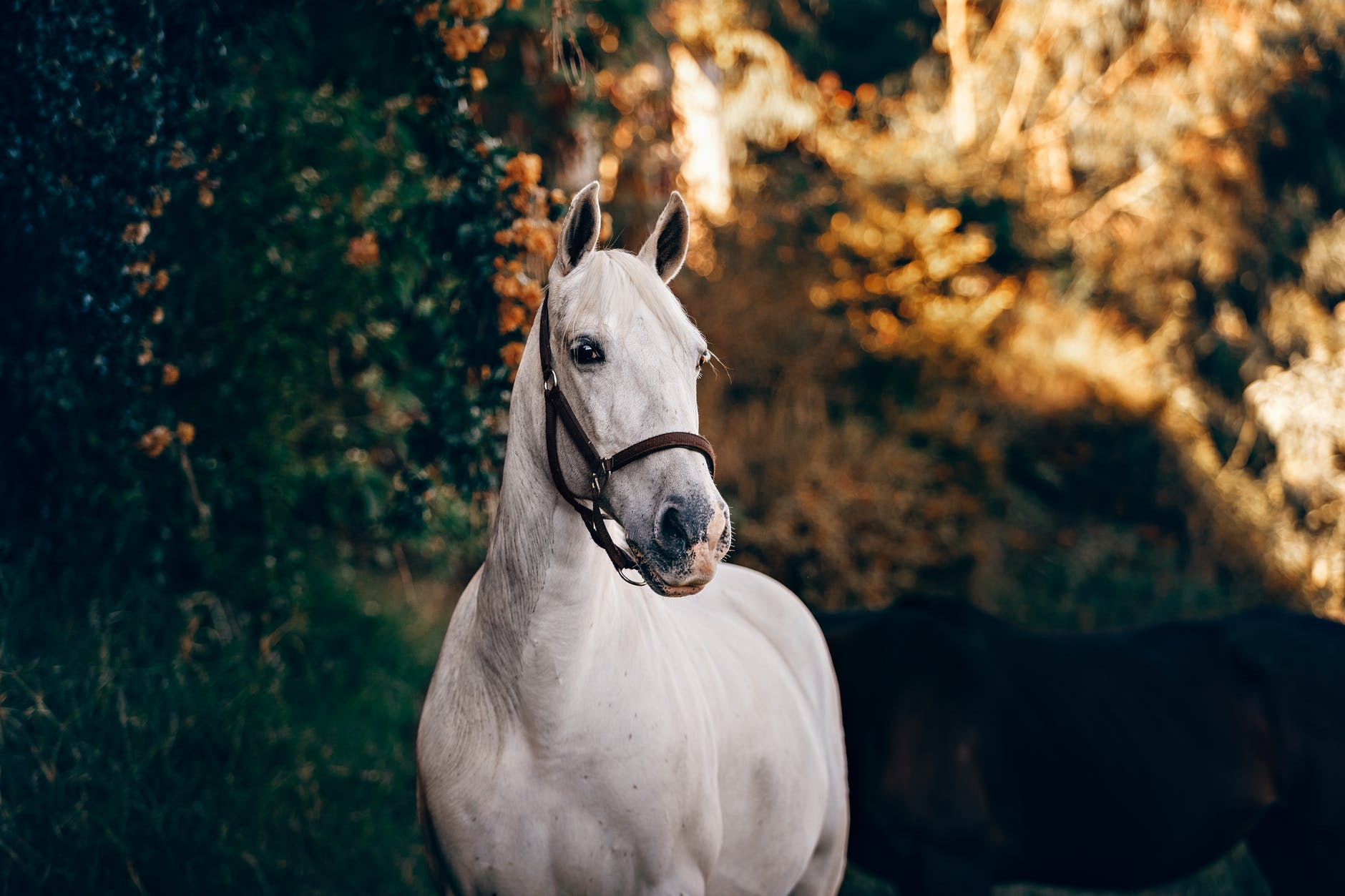 white horse near green leaves